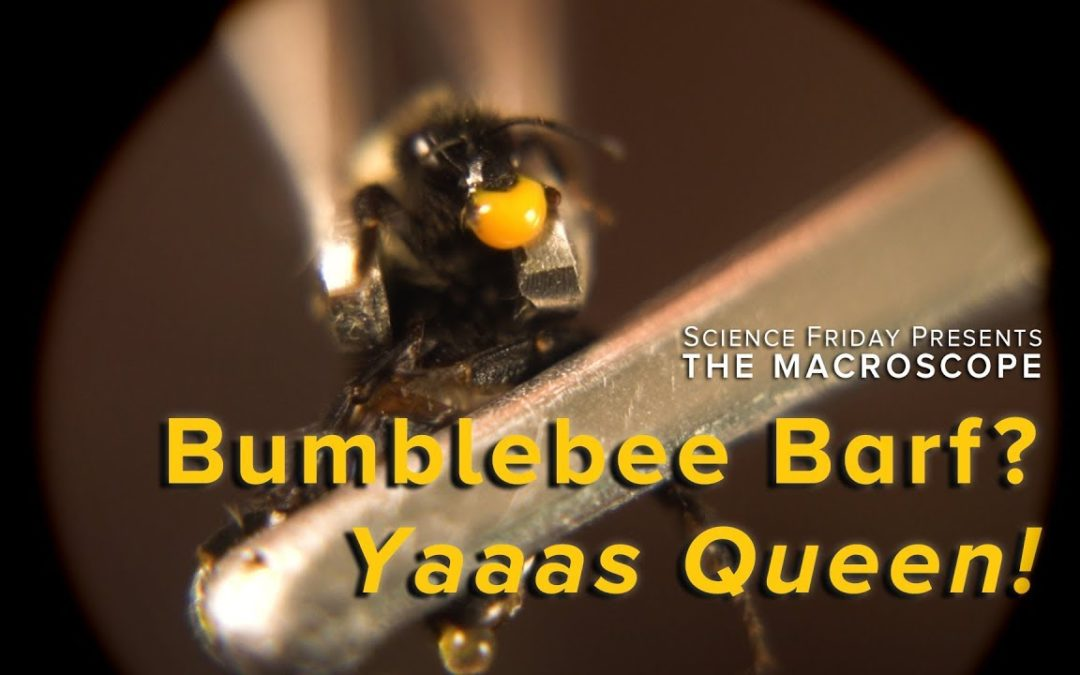 Bumblebee Barf: How it Creates Queens
