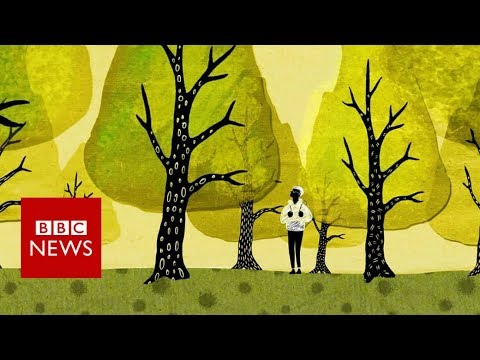 """How Trees Talk to Each Other on """"The Wood-Wide Web"""""""