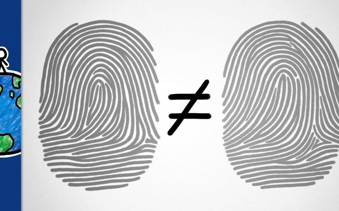 Why are our fingerprints unique?