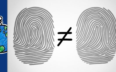 Why are our fingerprints unique?